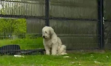 Dog waits 5 years outside dead owner's home