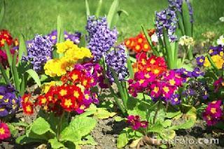 Flowers in a Garden Border (c) FreeFoto.com
