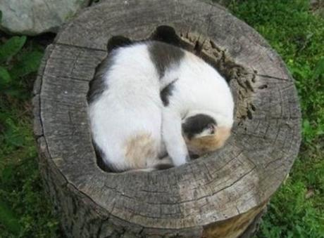 Cat Asleep Inside a Tree Stump