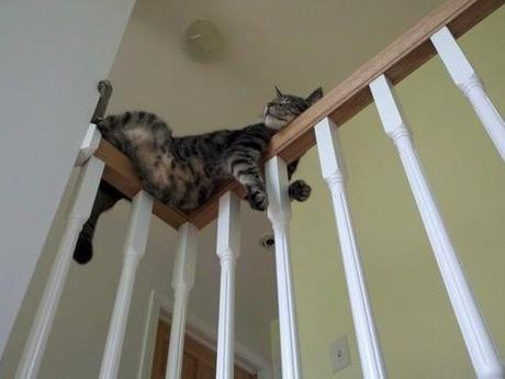 Cat Asleep Inside a Banister