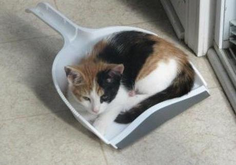 Cat Asleep Inside a Dustpan Scoop