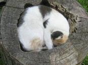Sleepy Cats Sleeping Unusual Places
