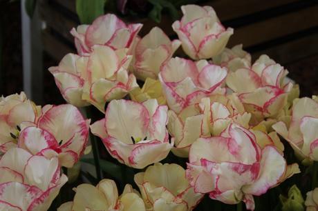 Tulip Rosy Bouquet
