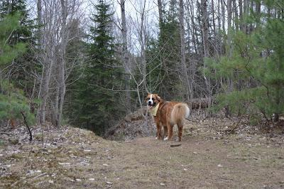 #Photos: #Hiking trip with our #Chihuahua friend Yoshi, #Ontario #Canada