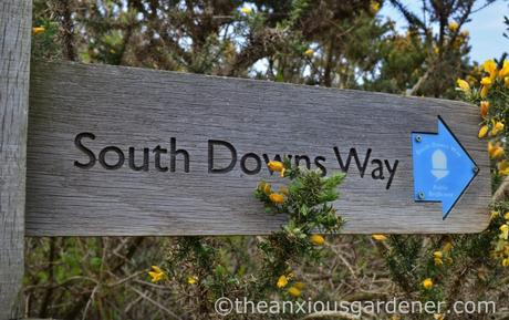 South Downs Way (10)