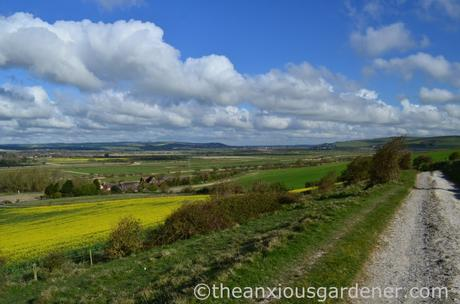 South Downs Way (8)