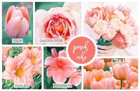 peach-echo-pantone-2016