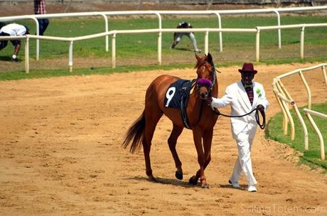 walking horse to race track