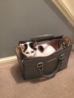 If It Fits, I Sits- Cats in Awkward Places- by Various Unknown Authors- Feature and Review
