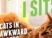 Fits, Sits- Cats Awkward Places- Various Unknown Authors- Feature Review