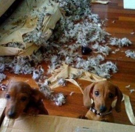 Guilty Dogs