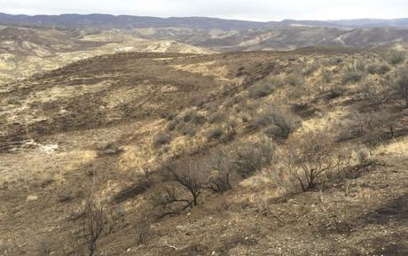 Soda Fire Recovery Not Going as Well as Portrayed in the Media