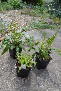 A quick run out to a plant fair