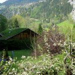 An Afternoon Walk in Lauterbrunnen – Falling Light and Deep Precipices
