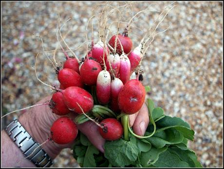 How to grow perfect Radishes