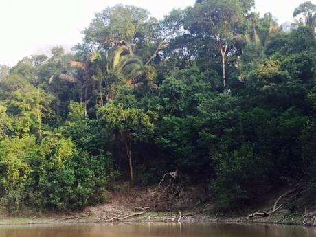 Surviving the Amazon Jungle Part 1 – Enduring Day One