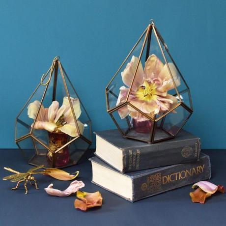 We've found 3 completely different uses for our pentagon brass terrariums, take a look now and check out how versatile they are!