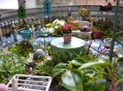 Fairy Gardens: Container, Garden