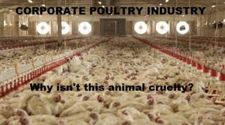 corporate poultry industry
