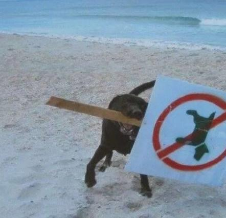 Dog Takes No Dog Sign