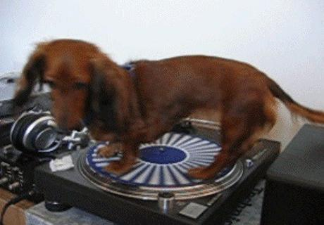 Dog Spins Of Record Player