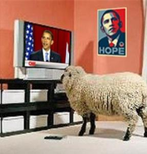 sheeple watch TV