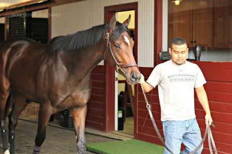 The Past is Present at Sagamore Farm – Gearing up for Preakness 2016