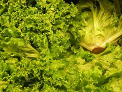 vitamin K dark green leafy vegetables photo