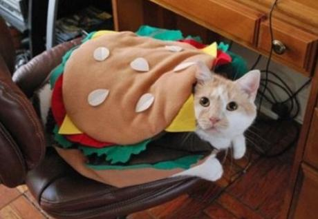 Cat Looks Like a Burger