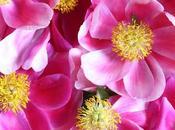 Spring Favorite: Peony Bloom