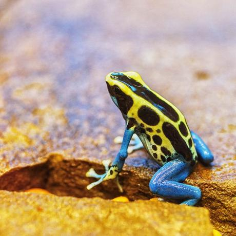 Be Inspired by Frogs