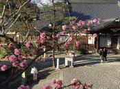 Back! Japan 2016 Travel Journal, Part Arriving Osaka