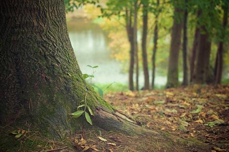 tree-trunk-forest-floor-trunk-roots