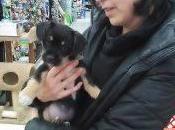 Adopt Rescue Pup.. Recipe Risotto Dogs