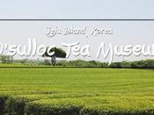 O'sulloc Museum Jeju Island, Korea