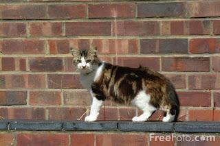 Image: Cat on a wall(c) FreeFoto.com