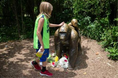 cincinnati zoo harambre memorial