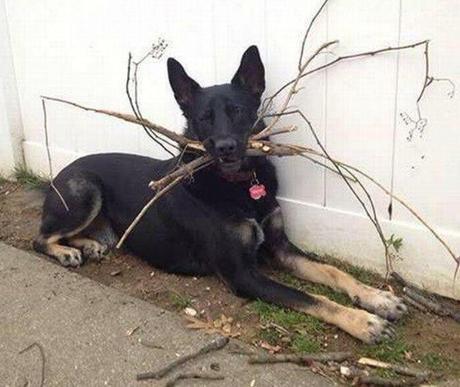 Dog Winning At Fetch