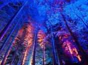 Travel: Enchanted Forest Supporting Charity