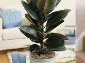 Indoor Houseplants That Purify Around