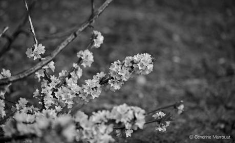 Spring 2016 (Part 3)