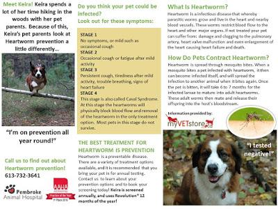 Pet Parasite Protection: Heartworm, Ticks and Fleas education for dog and cat owners
