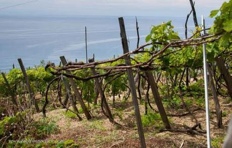 First Friday   Wines of Liguria, IT   № 4