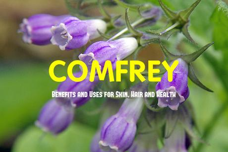 Comfrey Benefits and Uses