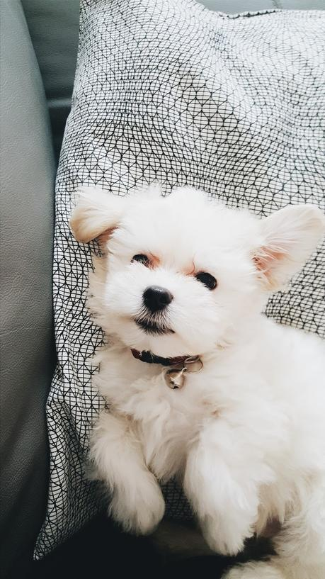 Being A First-Time Puppy Owner