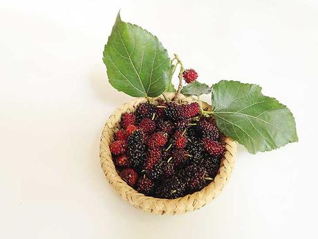 Mulberry Extract for Bleaching Skin