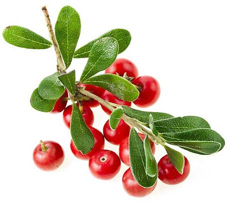 Whiten Skin with Bearberry Extract