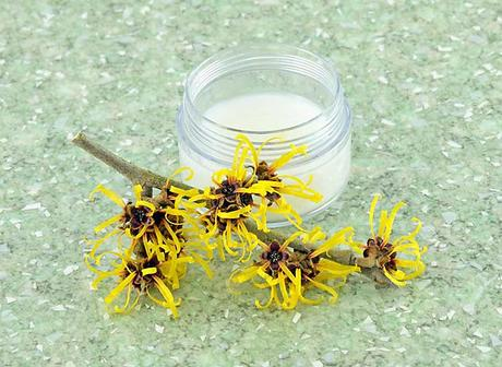 Witch Hazel: How to get rid of Genital Warts