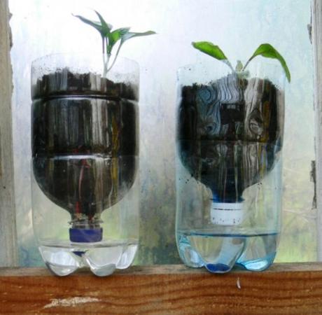 Empty Plastic Pop Bottle Transformed Into a Plant Feeder