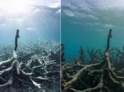 Great Barrier Reef: Diving Stench Millions Rotting Animals Video Environment Guardian